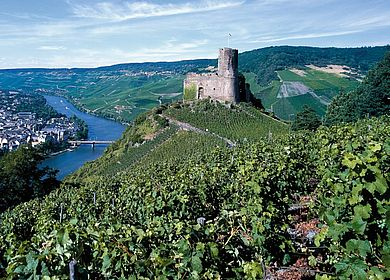 Die Moselburg Burg Landshut in Bernkastel-Kues liegt umringt von Weinbergen und Weinreben hoch über der Stadt Bernkastel-Kues. Im Hintergrund der Mosellauf.