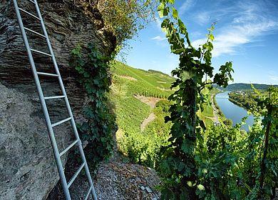 Klettersteig Mosel : Wandern auf einem klettersteig der mosel
