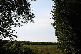 Longkamp